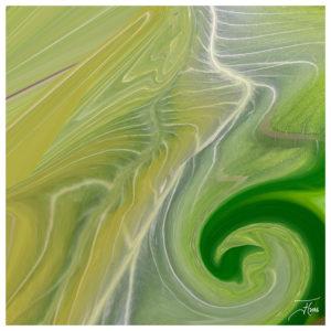 """""""Green 4"""" - Bild von Frauke Hohberger"""