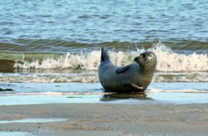 Ein Ausflug zur Seehundbank ist für Kinder und Erwachsene ein tolles Erlebnis.
