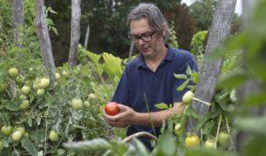 Tomatenernte auf dem Agriturismo Pirapora