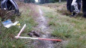 Die Untersuchung von Wolfskot gehört mit zum Wolfs-Monitoring.