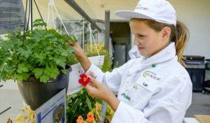 Vamos und Europa Miniköche: Ein Mädchen pflückt Kräuter