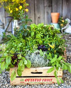 Vamos und Europa Miniköche: Eine Kiste voller Kräuter